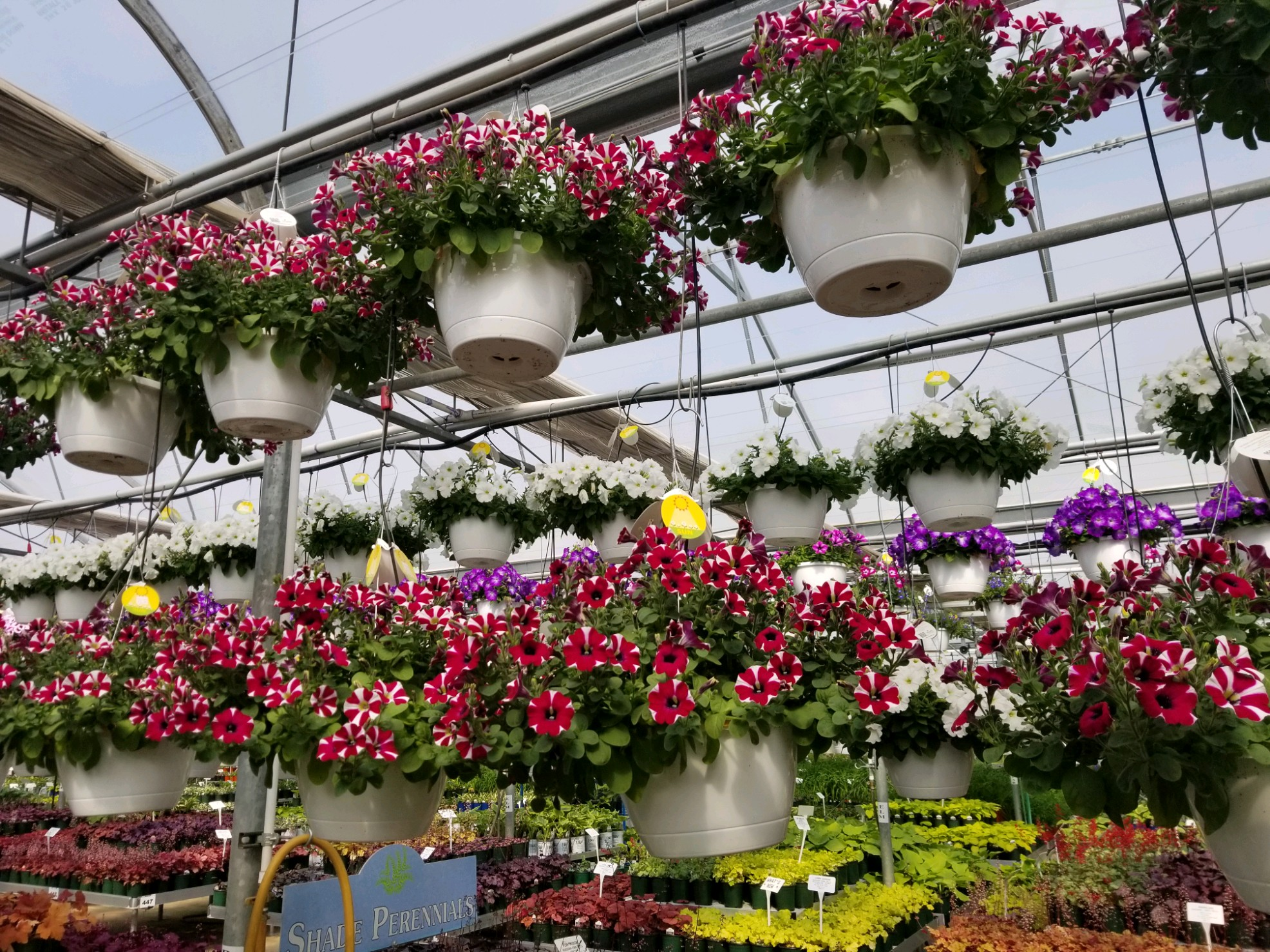 pictured are hanging plants and flowers in a greenhouse outside